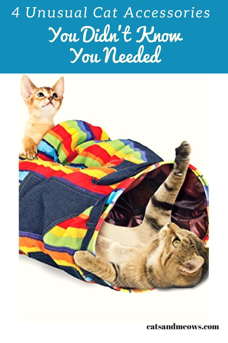 Here are some of the cat accessories available on the market today that you never knew you needed, but will almost definitely want for your spoilt kitty.