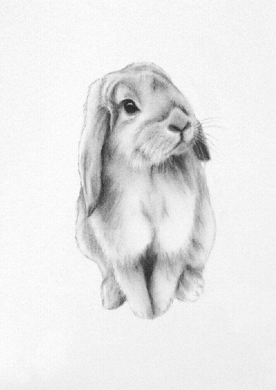 "Bunny Art, ORIGINAL 5""x7"" Lop Eared Bunny Charcoal Drawing, Bunny Sketch, Nursery Art - Rabbit Art, Rabbit Sketch"