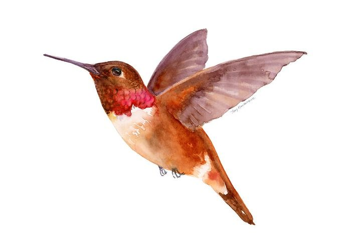 Let people know you care with this Greeting Card featuring the watercolor painting RUFOUS HUMMINGBIRD by Amy Kirkpatrick, $4.95 ea., 10-Pack $27 • AmyPrints.com