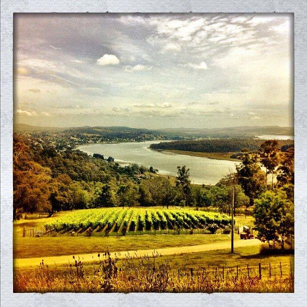 """The Tamar Valley #wine #tamar #river #vineyard #landscape #tasmania"""
