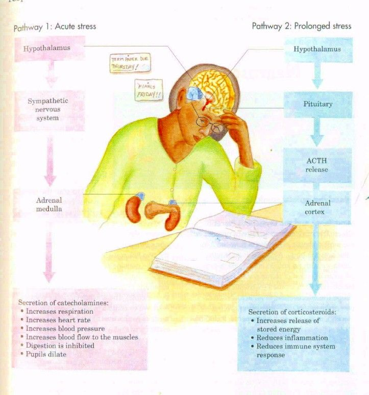 stress causes and effects essay