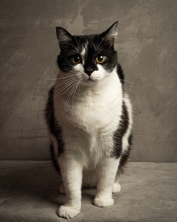 Beautiful Cats Breeds That You Have Never Seen En 2020 Chats Et Chatons Beaux Chats Animal Domestique