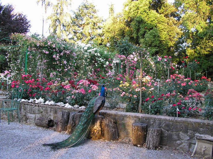 the cavriglia rose garden in italy is the largest privately owned rose collection containing over 7000 species roses pinterest italy gardens - Most Beautiful Rose Gardens In The World