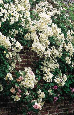 Climbers Arches Trellis From Natural Fencing: Climbers Arches ...