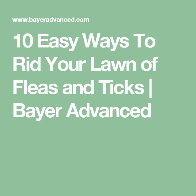 10 Easy Ways To Rid Your Lawn of Fleas and Ticks | Bayer Advanced