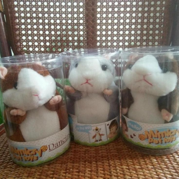 Now available on our store: Talking Hamster M... Check it out here! http://jagmohansabharwal.myshopify.com/products/talking-hamster-mouse-pet-plush-toy-hot-cute-sound-record-hamster-educational-toy-for-kids-gift?utm_campaign=social_autopilot&utm_source=pin&utm_medium=pin