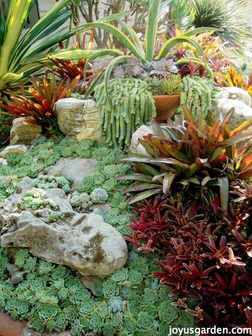 How to care for propagate sedum morganianum aka burro 39 s tail garden ideas pinterest for Garden safe take root