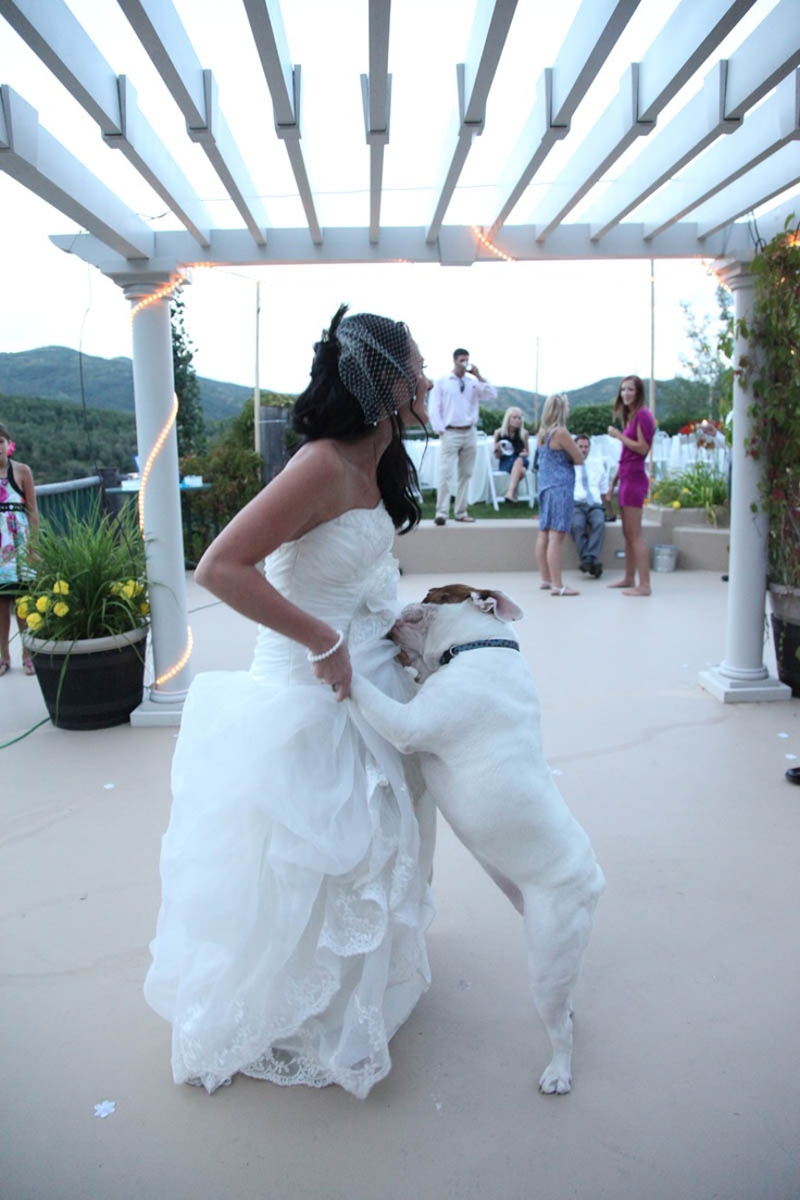 60 best Dog Dancing! images on Pinterest   Doggies, Funny animal ...