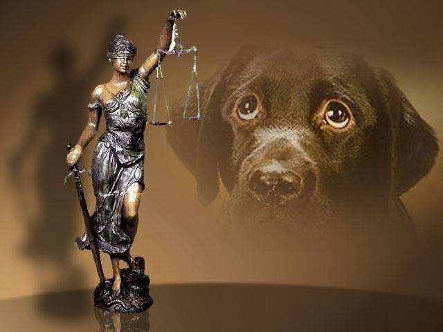Στον Εισαγγελέα όσοι εγκαταλείπουν ζώα συντροφιάς www.sta.cr/2GIp6