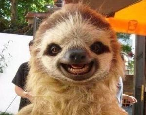 cute sloth showing its teeth