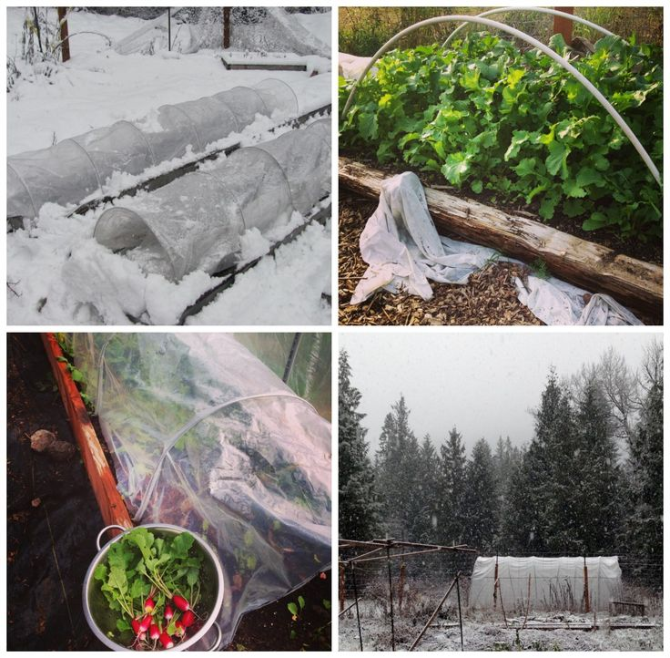 How To Plant Your Fall And Winter Garden ~