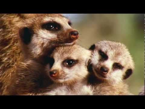 BBC: Attenborough's Wonderful World (HD)  THIS SIMPLY IS AMAZING!!!!!!  Indeed, what a wonderful world by our Creator, Jehovah!