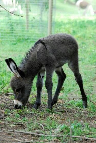 371 Best Images About Donkey On Pinterest Animals
