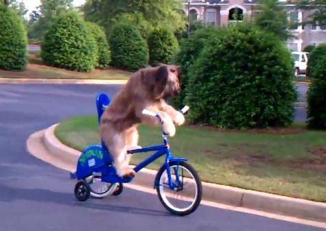 Pets on Wheels III | UrbanScooters.com Blog