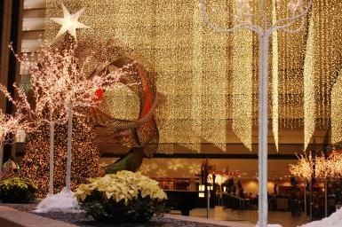 San Francisco's Best Christmas Trees & Holiday Lights: Curtains of…
