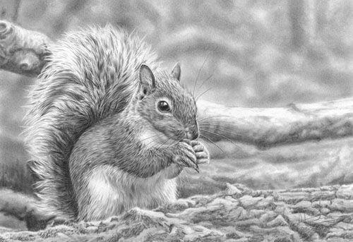 Nolon Stacey Wildlife Artist British Wildlife Pencil