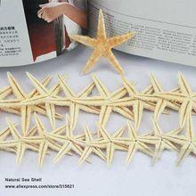 20 adet 6-8 cm büyük doğal denizyıldızı dileğiyle şişe deniz yıldız ev dekorasyon duvar etiketler süsleme organik malzeme ücretsiz kargo(China (Mainland))