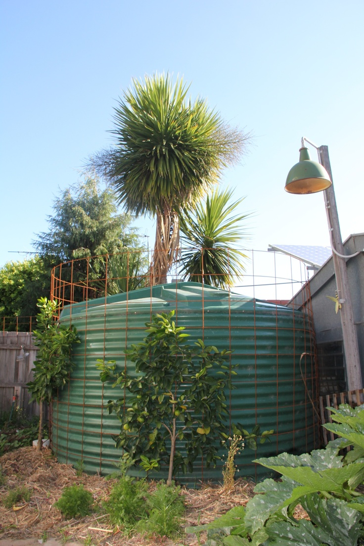 9000 litre water tank, it's fed from a diverter, it diverts the first bits of cold way that comes out when you turn on the hot water tap, also from the down pipes.    Recycled tram lights & espaliered lime trees