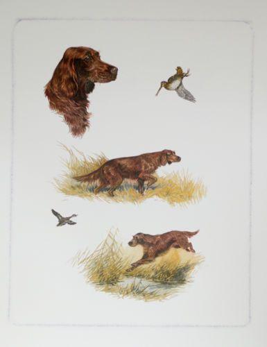 IRISH-SETTER-RED-WORKING-GUNDOG-DOG-ART-PRINT-by-Boris-Riab
