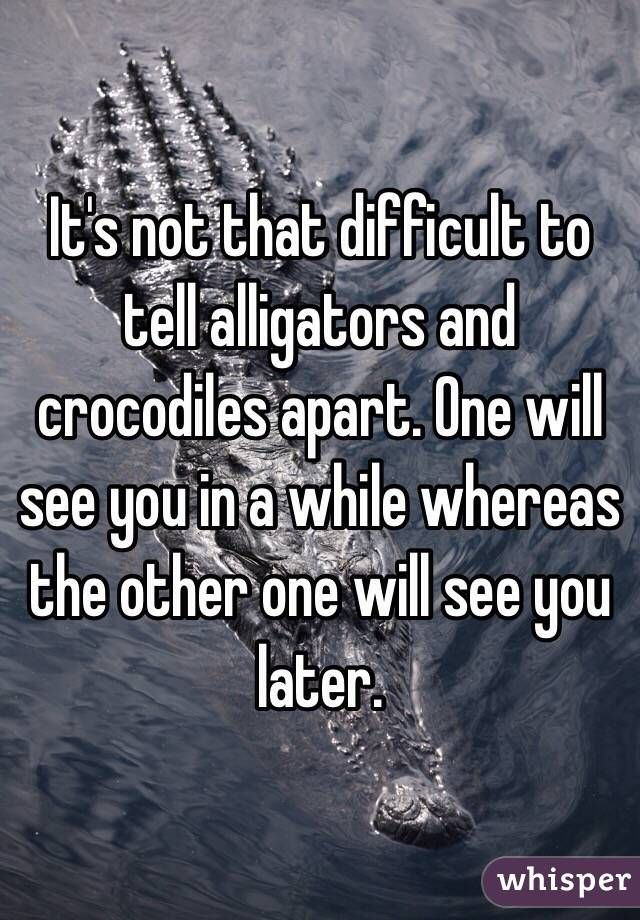 alligators/crocodiles