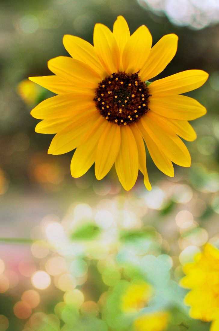 Flower Bokeh  by ~amethyst1111