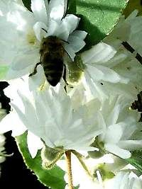 PSZCZOŁY.PL - Portal o tematyce pszczelarskiej .
