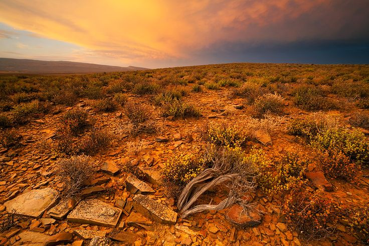 KAROO SUNSET - Little Karoo, Western Cape, South Africa. Brilliant warm sunset light reflects of a retreating storm cloud over the plains of the Little Karoo.