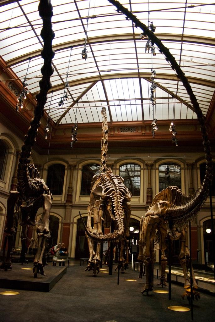 Berlin Museum für Naturkunde.