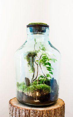Znalezione obrazy dla zapytania las w szkle