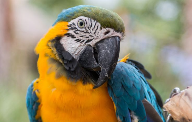 """Macaw parrot snapshot"" has been published on Pascal Parent Photos  More information at http://wp.me/p4WBG2-nw One, if not my biggest, pet peeve in the photography space is: Because you are known as a photographer, snapshots will not do! But what if I wanted to share a memory, not a portfolio image? No you cannot and will not publish that, says the masses! So I am defying the masses, here is my macaw parrot snapshot! Photograph by Pascal Parent © 2016 var hupso_services_c="
