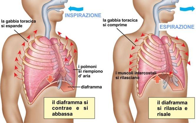 respirazione polmoni diaframma