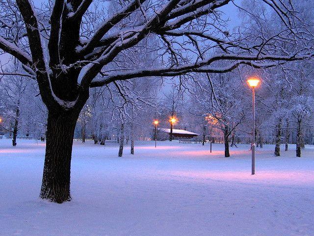 Sininen puisto / The blue park / (c) Minna Autio