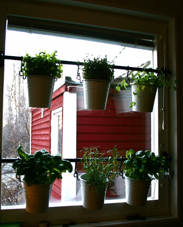 Kitchen Garden Indoor: 104 Best Garden In The Window Images On Pinterest