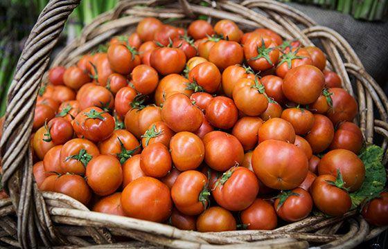 Tasty organic tomatoes | The Happy Apple