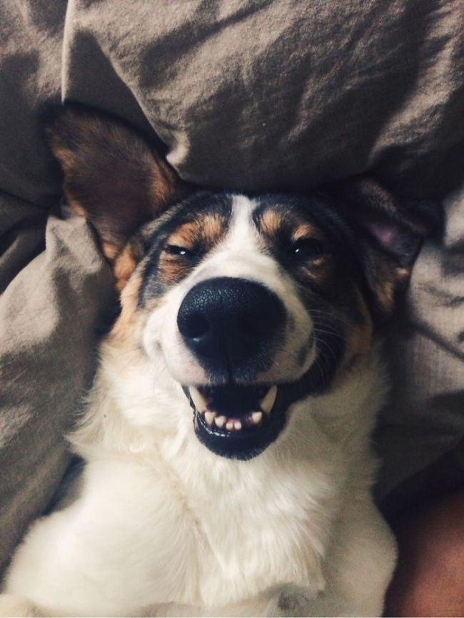 24 of the happiest dogs in the world