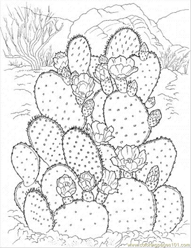 flower Page Printable Coloring Sheets   Coloring Pages Cactus 3 (Natural World > Flowers) - free printable ...