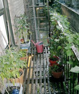 Urban garden blog.
