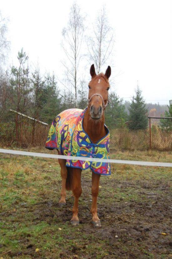 Projekt: Skok po sukces w zawodach! - Wspieram.to #kon #horse #padok #derka #stajnia