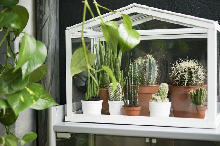 socker kweekkas binnen buiten wit ikea och inspiration. Black Bedroom Furniture Sets. Home Design Ideas