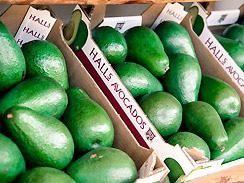 Fresh Vegetables Lowveld         Halls Nelspruit