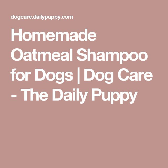 Homemade Oatmeal Shampoo for Dogs | Dog Care - The Daily Puppy