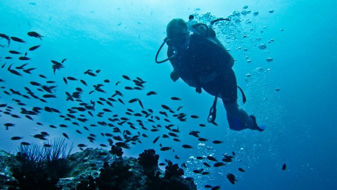 The Complete Guide To Diving in KOH TAO, Thailand