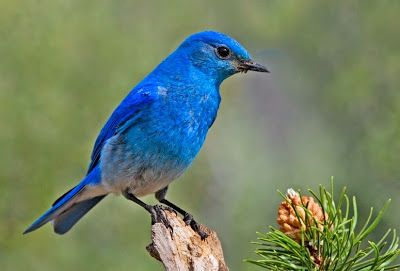 http://www.klimanaturali.org/2015/04/as-mais-belas-aves-do-mundo.html
