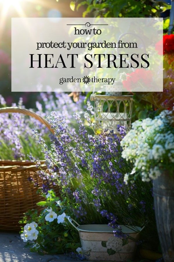 1000 ideas about heat stress on pinterest chicken chick coops and chicken coops - Gardening in summer heat a small survival guide ...