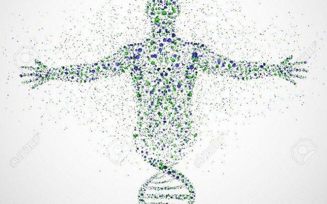 Avete mai sognato di essere immortali? Forse un giorno lo potrete essere! Un nuovo studio dell'Università della Virginia ha analizzato l'attività di un gene potenzialmente in genetica medicina oct4