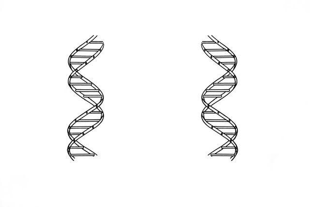 На какой из этих картинок спираль ДНК закручена в верном направлении?