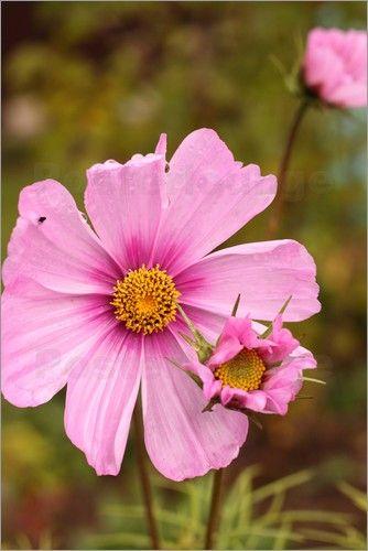 Poster Blüten im Wind - © Christine Bässler - Bildnr. 372252