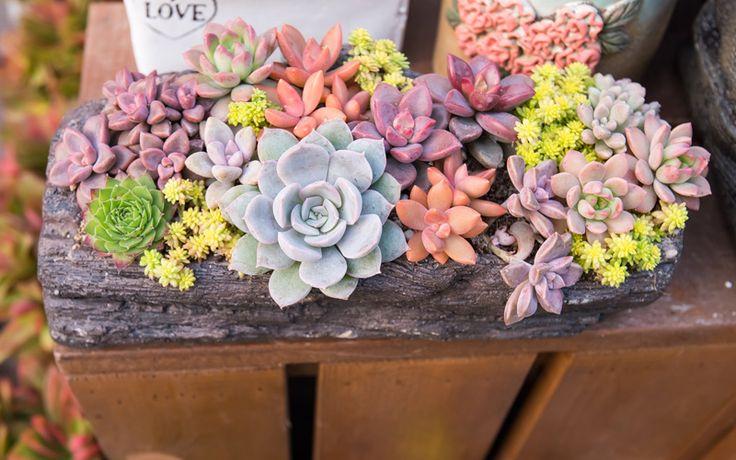 47 Best Succulents Images On Pinterest Succulent