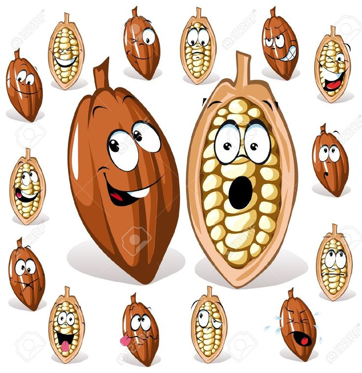cocoa seeds - Google Search