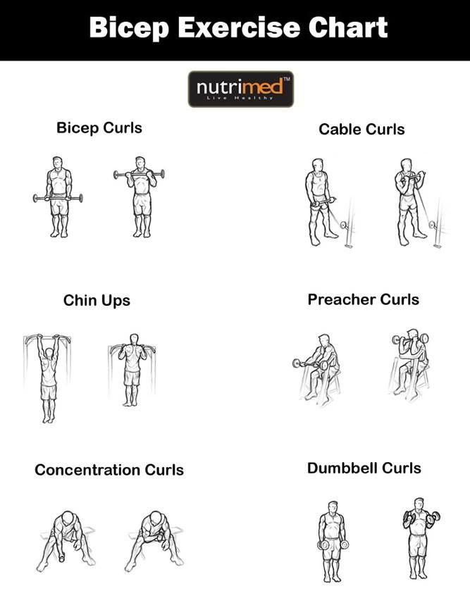 Biceps Exercise Chart..  www.nutrimed.co.in